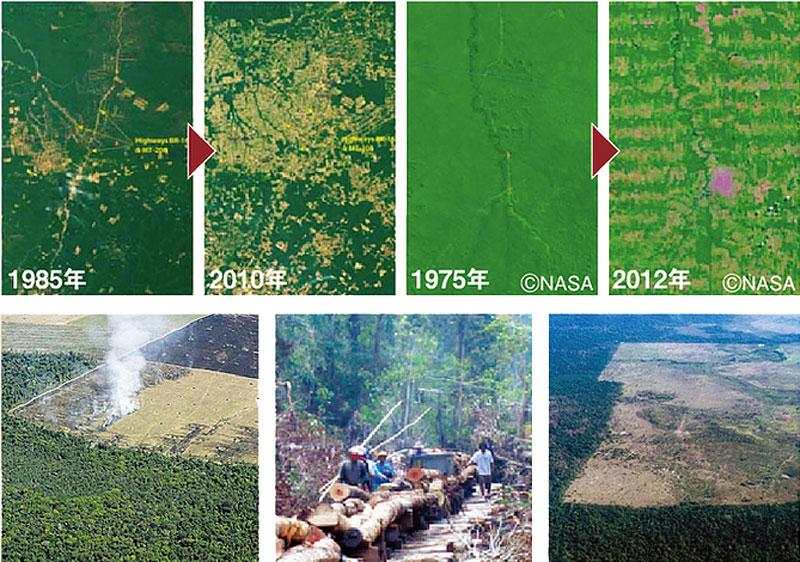 森林栽培が急速に進んでいます
