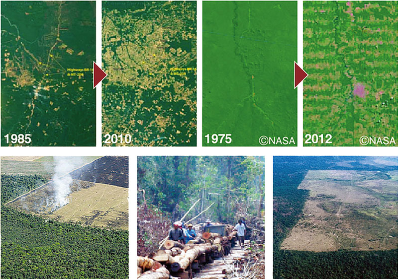 Forest cultivation is progressing rapidly.